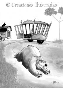 El oso Fructuoso escapa del circo